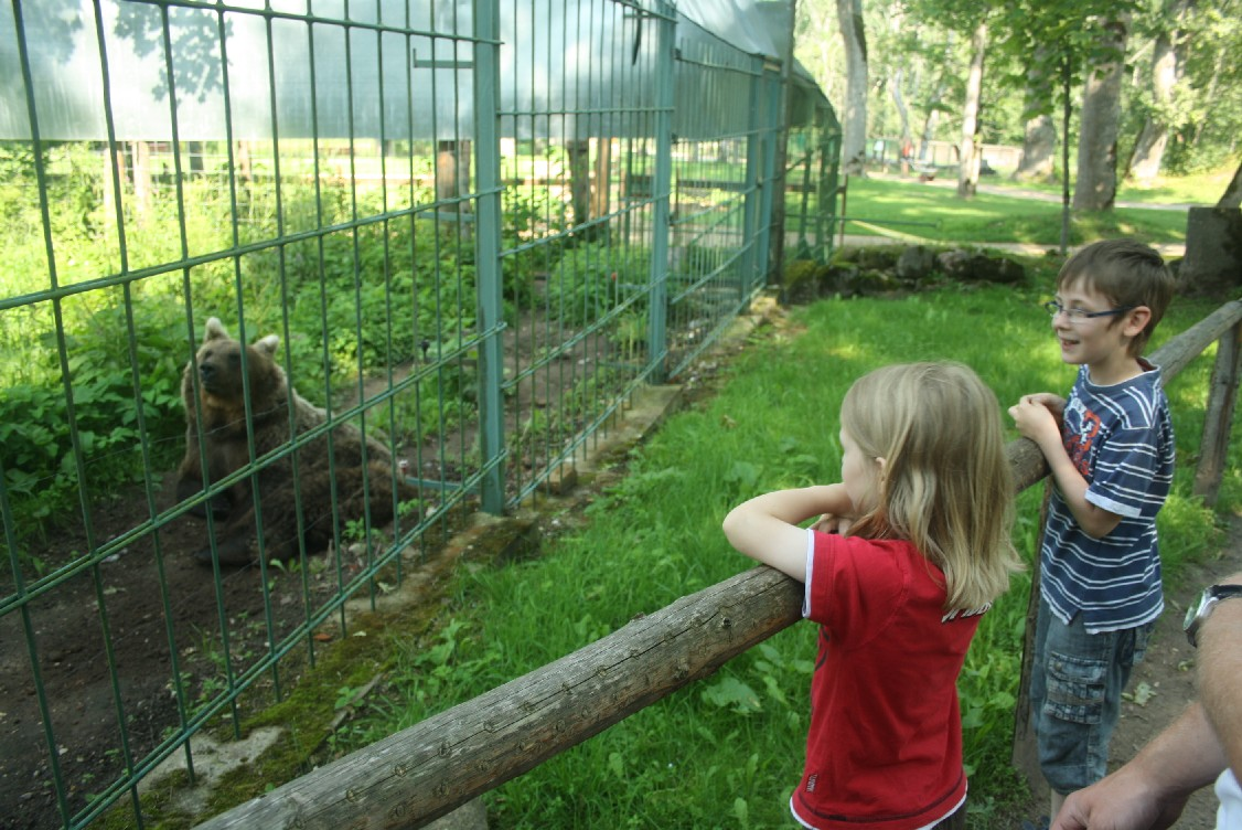 There is a small animal park in Elistvere that shows all the animals that also roam freely through the woods of Estonia.