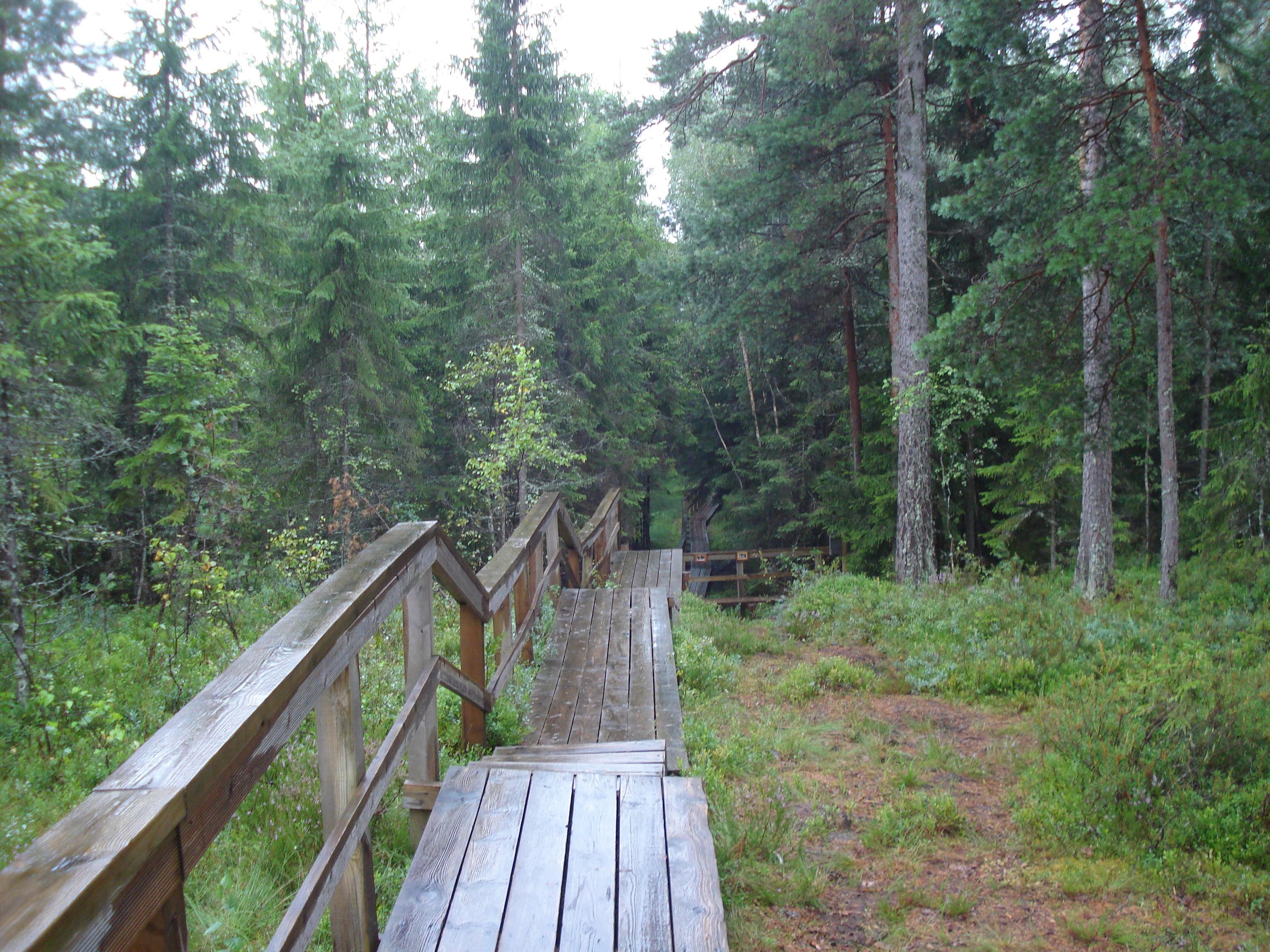 Hochmoor-Viljandi-Nationalpark-Wanderweg.