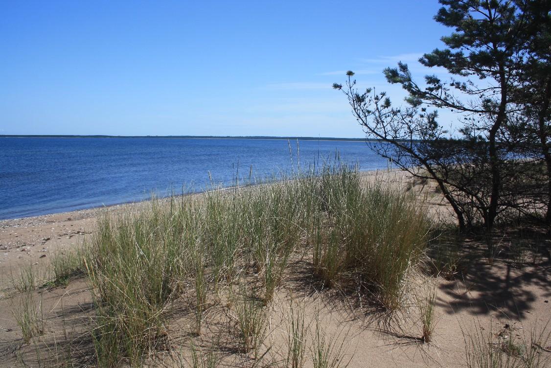 Der Strand von Harilaid im Nordwesten der Insel Saaremaa - ein Traum!