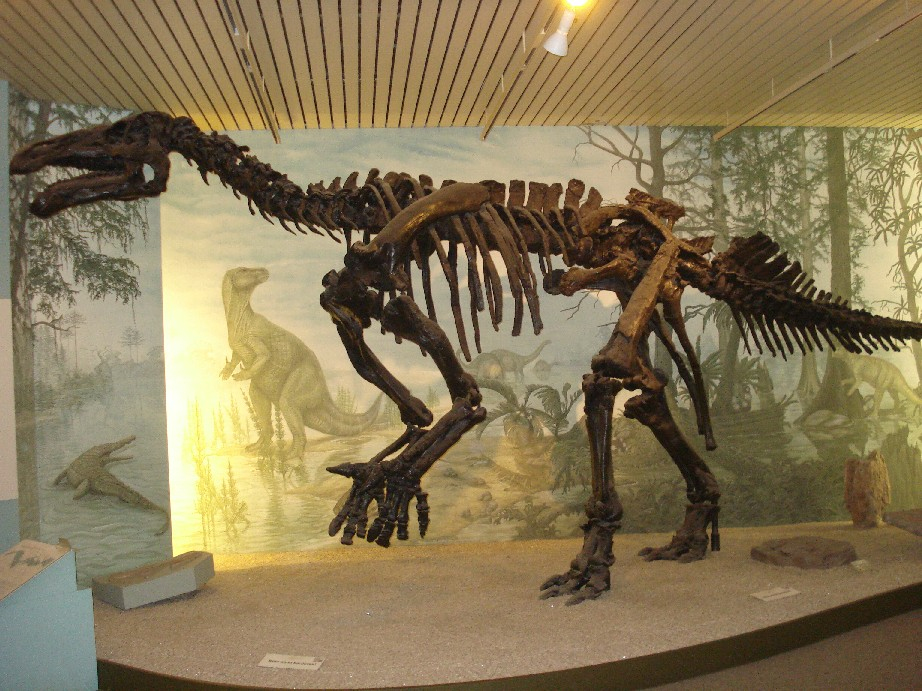 These are the bones of an iguanodon dinosaur who left their footprints in Obernkirchen.