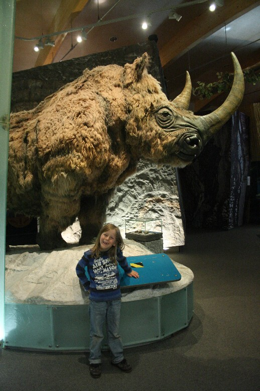 Silas met a glacial woolly rhinoceros in life-size.