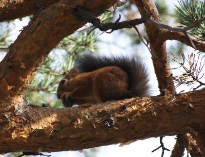 Einem Eichhörnchen so nahe zu kommen, ist auf einem Spaziergang im Setesdal keine Seltenheit.