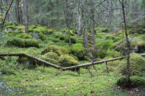 Wunderbar grün, und aus den Augenwinkeln sieht man immer wieder Trolle durch die Gegend huschen... ;)