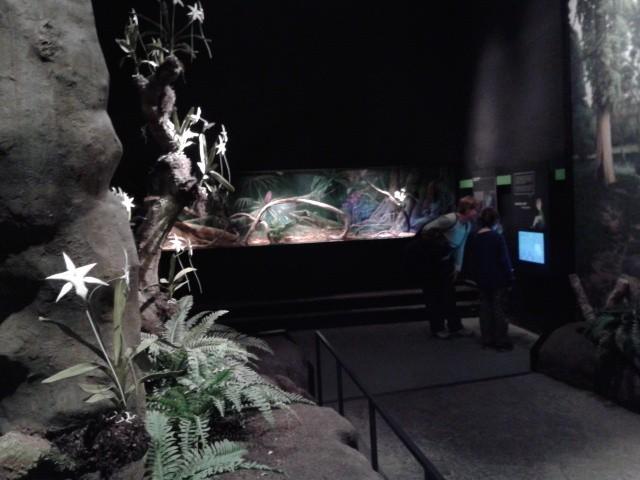 Lebendige Tiere hinter Glas, aufwändige Installationen und interaktive Informationsvermittlung in mystischer Atmosphäre - das Darwineum verwirklicht ein absolut spannendes Konzept.