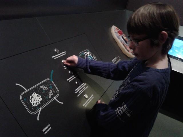 Die Bestandteile einer Zelle und ihre Aufgaben - gut aufbereitet, aber für 9-Jährige doch schnell too much information.