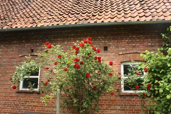 Schaumburg: rote Dachziegel, dazu Fachwerk oder Backstein und viel Idylle - diese Fassade gehört zu einem alten Hof in Lindhorst.