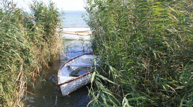 balaton-schilf-ruderboot