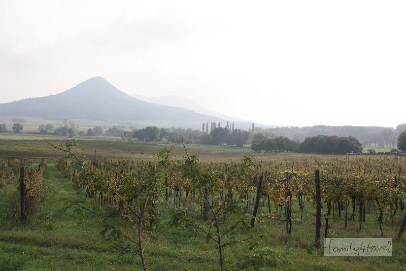"""Oberhalb der Weinberge ragen mehrere ehemalige Vulkankegel als """"Zeugenberge"""" in den Himmel."""