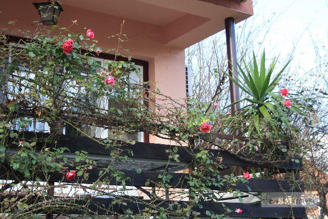 Das Haus mit dem Stacheldraht-Gartenzaun schräg gegenüber habe ich tatsächlich nicht fotografiert.