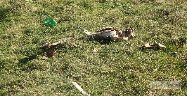 Spuren von Wildtieren in der Wildnis... kommt halt vor in Rumänien.
