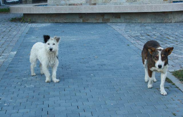 Allgegenwärtig und wenig gefährlich: Straßenhunde.