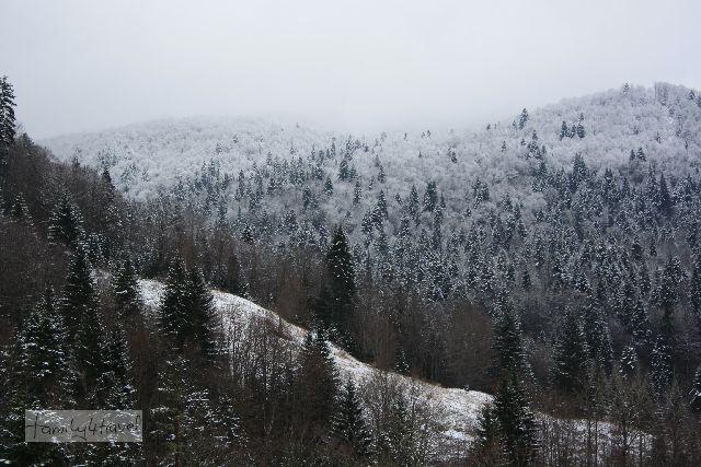Winterwunderland, wie mit Puderzucker bestäubt - Montenegro, nahe des Wintersportorts Kolasin.