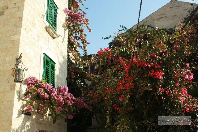 Split im November, Blumen
