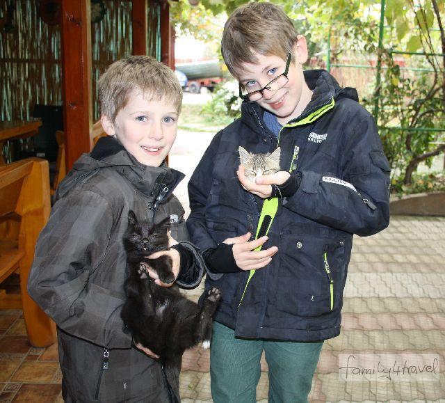 Die kleinen Katzen in unserer Pension im Donaudelta waren nur die ersten in einer langen Reihe von Katzen-Liebschaften, die die Jungs seitdem gepflegt haben.
