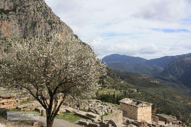 In Delphi ist schon Frühling - der blühende Mandelbaum ist ein interessanter Kontrast zum spektakulären Ausblick und der mystischen Stimmung des Ortes (den widerum die vielen Leute kontrastieren, besonders Familien mit lauten Jungs...).