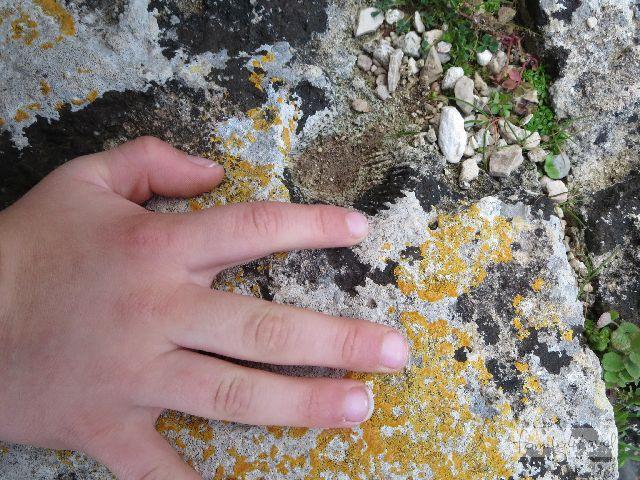 Auf einer der untersten Stufen zum Torre dell'Alto finden unsere Jungs einen fossilen Schatz.