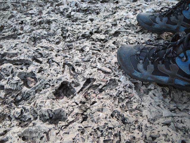 Dass das hier Sedimentgestein ist, kann der fossile Muschelkalk nicht verheimlichen.