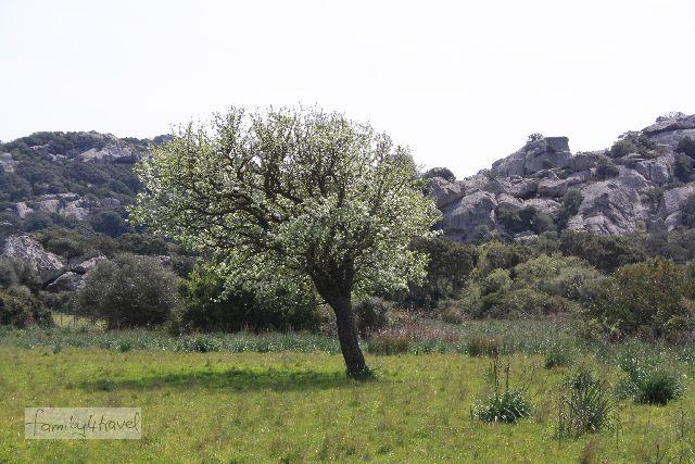 Im Südwesten ist es noch nicht allzu bergig, aber ohne Felsen geht es auf Korsika selten.