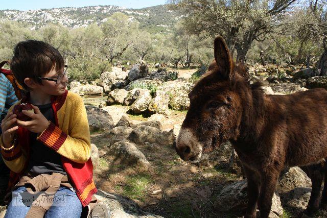 Manche Sarden werden besonders kinderfreundlich, wenn das fragliche Kind gerade einen Apfel isst... Tierische Begegnungen sind sowohl auf Sardinien als auch auf Korsika bei den meisten Wanderungen inklusive.