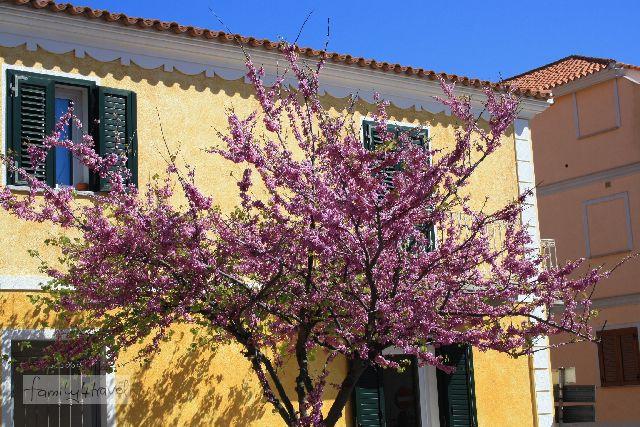 Die Fassaden der Häuser - hier in Santa Teresa im Norden - sind auf Sardinien irgendwie nicht ganz so schäbig wie auf dem Stiefel (wenn das natürlich auch nur ein herausgegriffenes Positivbeispiel ist).