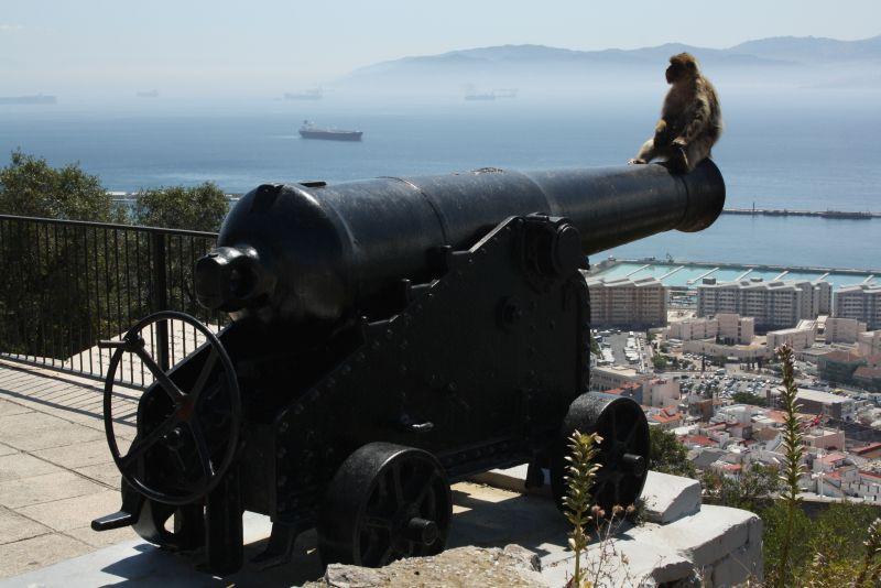 Gibraltar, Kanone mit Affen