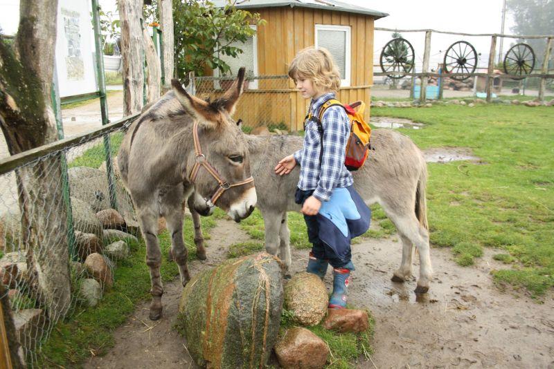 Esel streicheln bis zum Umfallen: Celina und Arne haben dabei mindestens so viel Ausdauer wie die Kids.