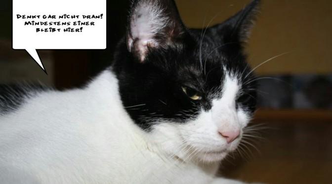 Katzenliebe, Katzenjammer: Von der Dummheit, Reiseblog UND Haustier zu haben