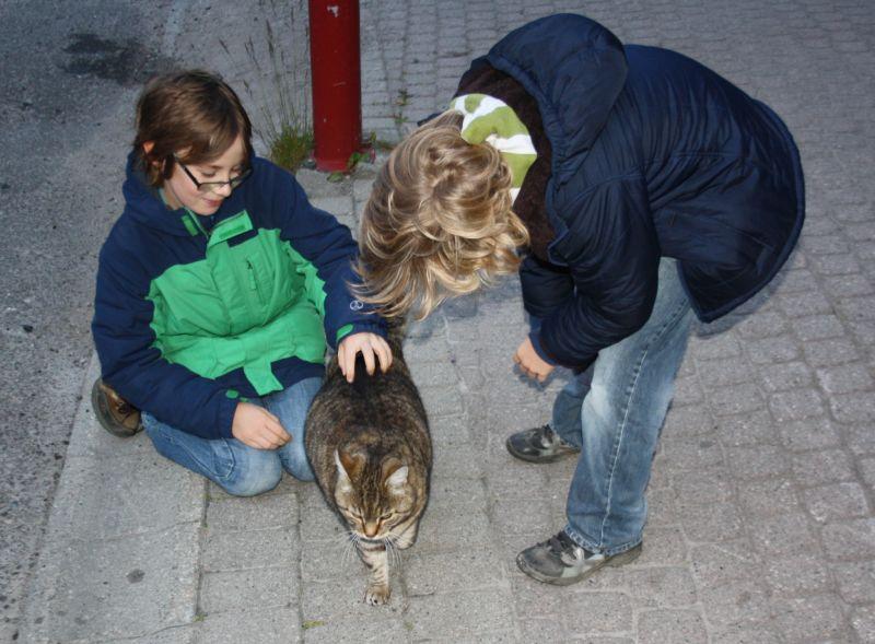 Die Katzen in Norwegen sind tendenziell besser genährt und weniger geduldig. Also, diese eine, die die Jungs auftreiben konnten.