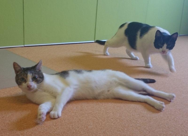 Loki und Lavinia, unsere beiden Katzenmädchen (alle folgenden Fotos kommen von der schlechten Handy-Kamera, da ich nie dachte, sie mal ins Blog zu stellen).