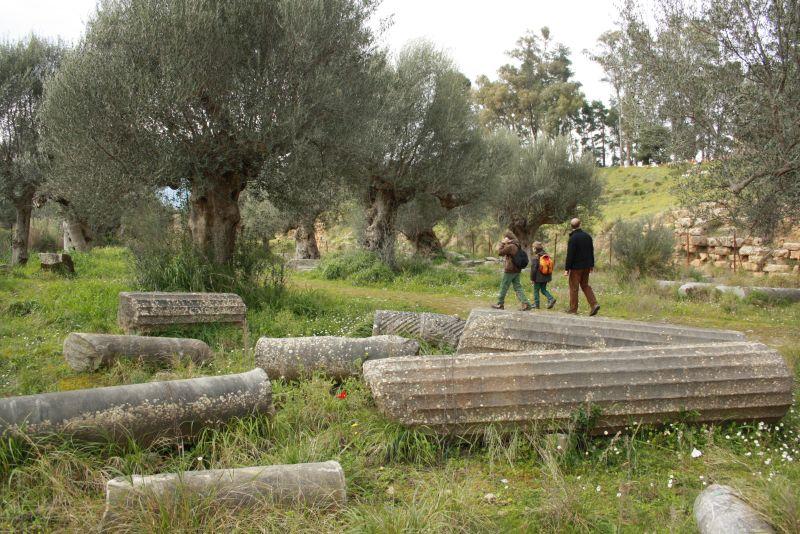 This is Sparta: frei zugängliche Ruinen im Olivenhain, dazwischen Frühlingsblümchen.