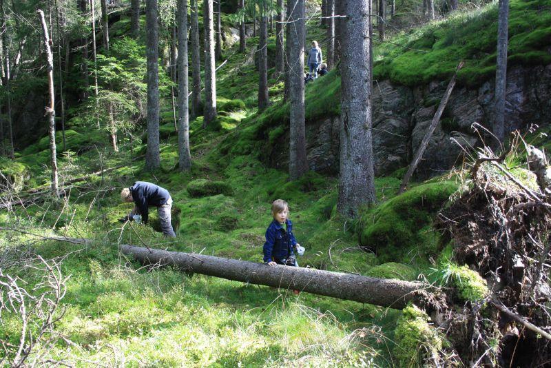 Schweden ist toll! Den Vormittag vorm großen Zittern verbrachten wir im Wald.