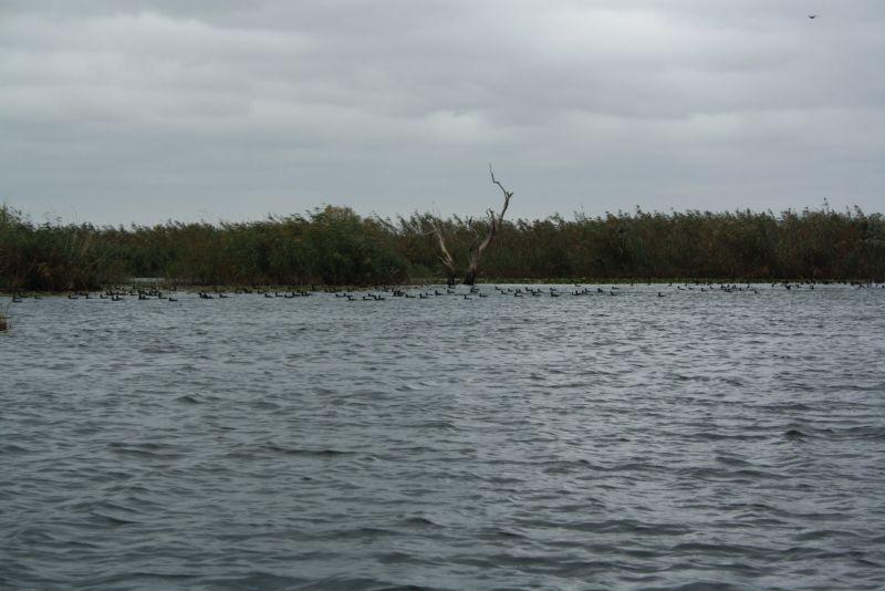 Vögel im Donaudelta.