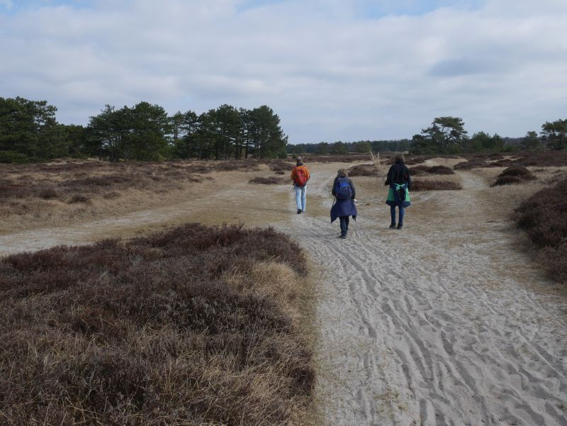 Die Dünenheide ist der Teil von Hiddensee, der mir am besten gefällt.