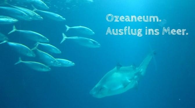 Ozeaneum Stralsund: Erfahrungsbericht eines herrlichen Familienausflugs