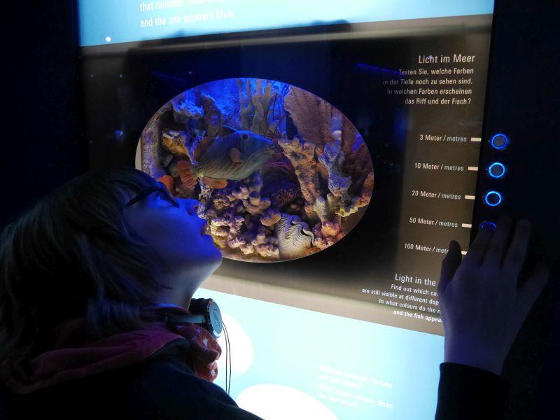 Wie im Meer, so herrscht auch in der Ausstellung Schummerlicht. Ein Exponat erklärt die Lichtverhältnisse unter Wasser.