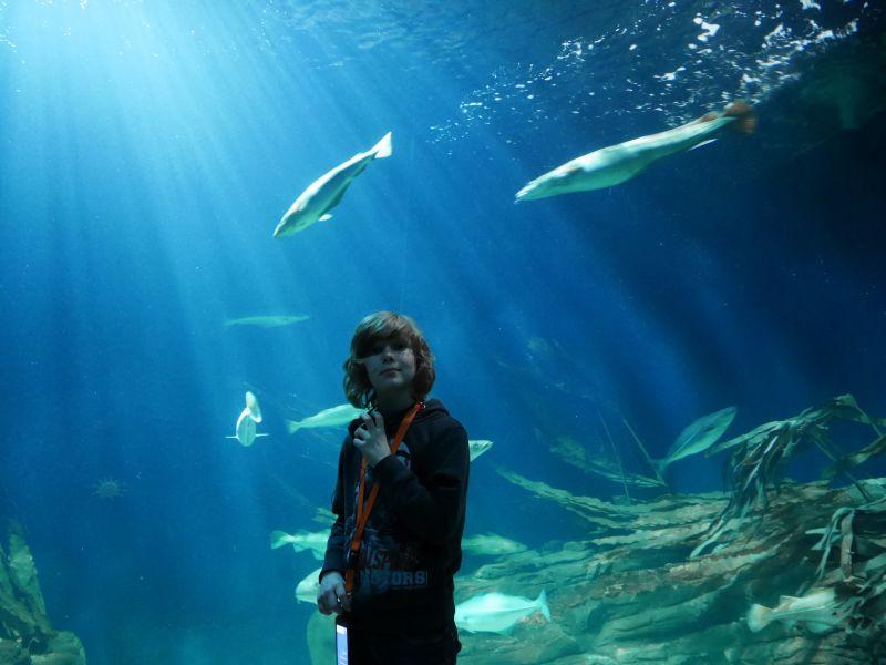 Aquarium im Ozeaneum.