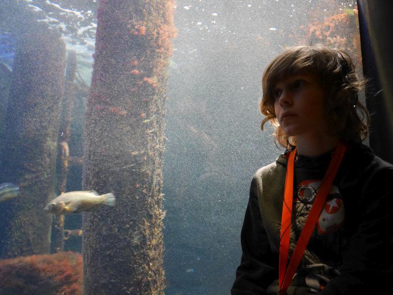 Aquarium Ozeaneum.