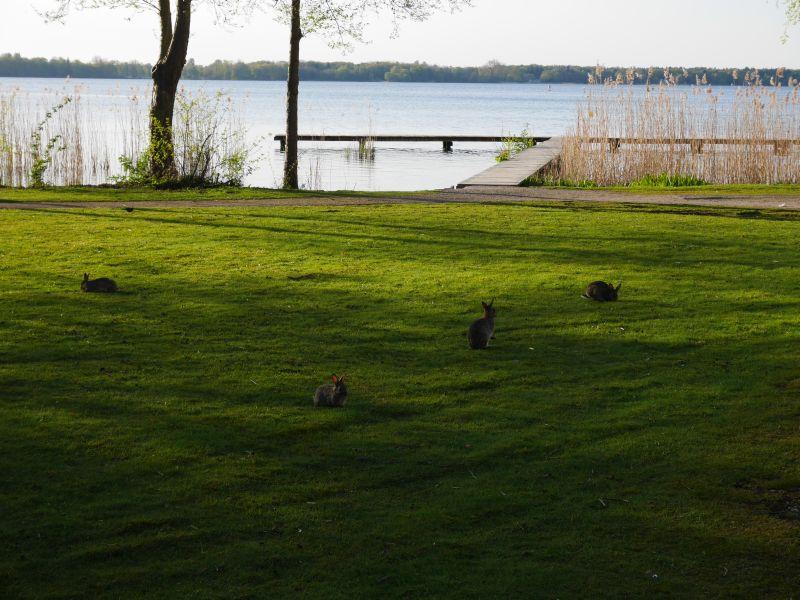 Kaninchen in Bad Zwischenahn.