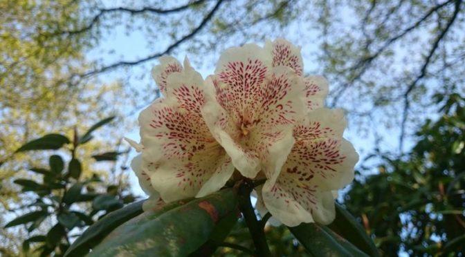 Park der Gärten: Floraler Familienspaß in Bad Zwischenahn