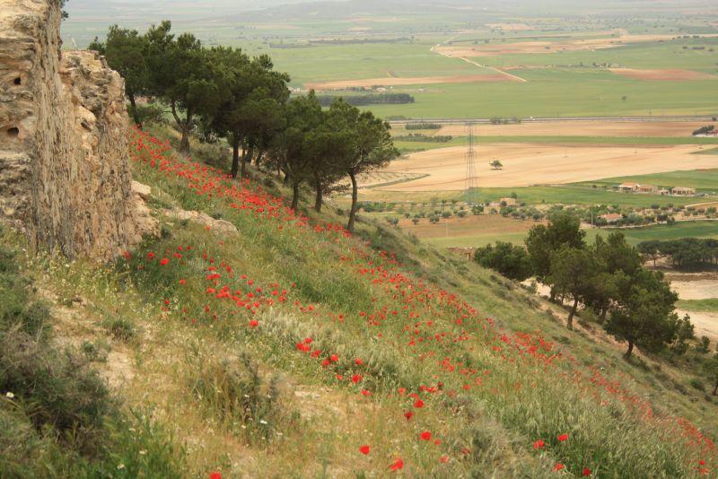 Spanien, La Mancha, Mohnblumen