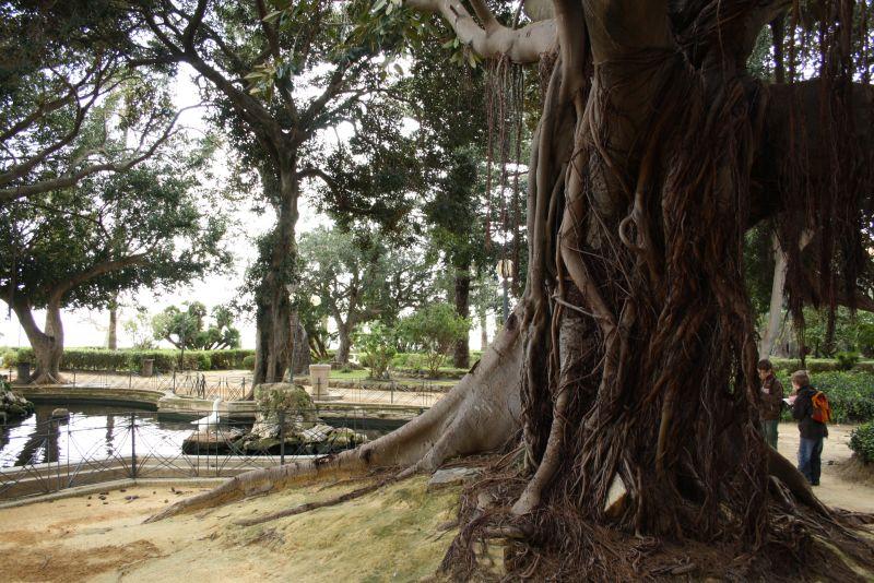 sizilien-sciacca-park-feigenbaum