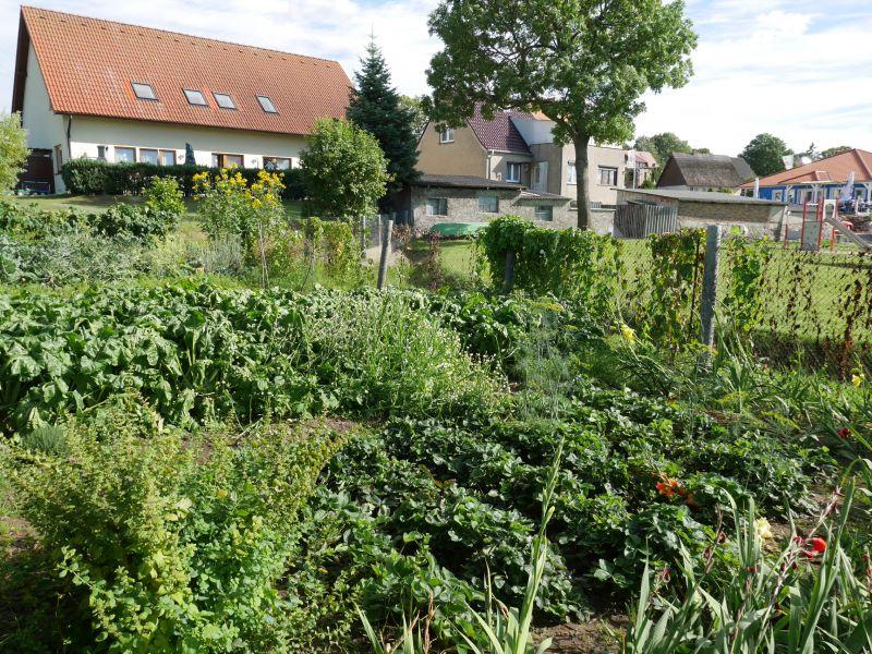 Gemüsegarten, Neppermin, Usedom