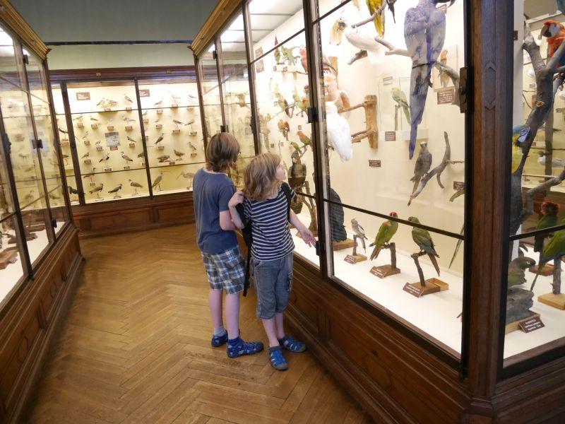 wien-naturhistorisches-museum-papageien