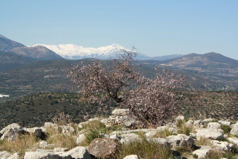 griechenland-peloponnes-mykene-im-februar-berge