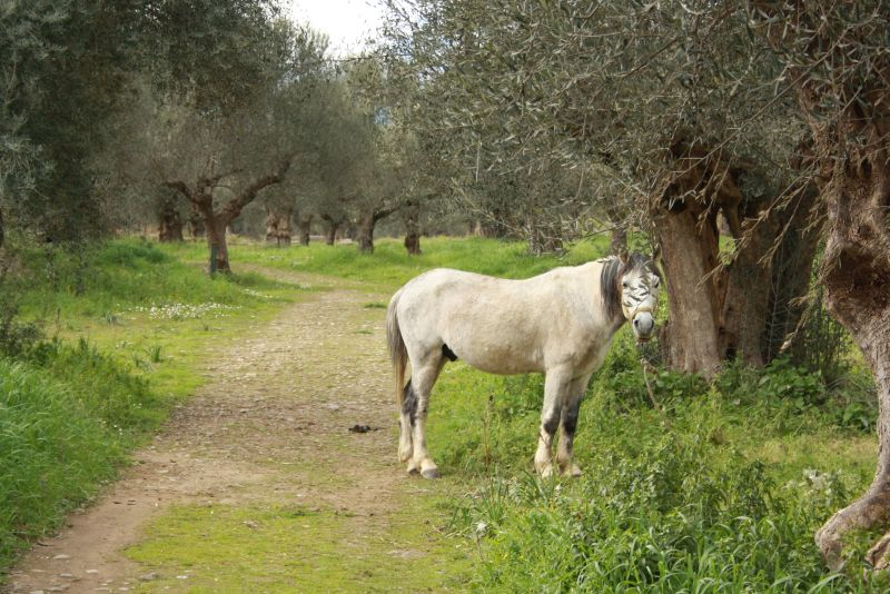 Pferd grast zwischen Ruinen, Sparta, Griechenland