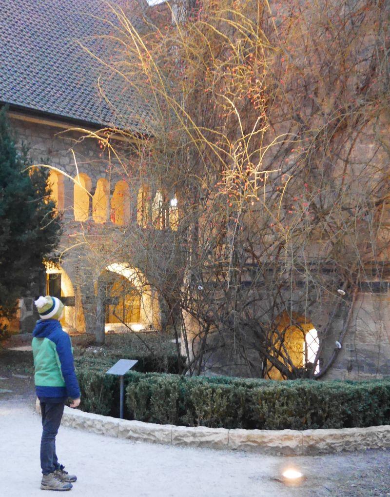 1000-jähirger Rosenstock Hildesheim im Winter, Hildesheim mit Kindern