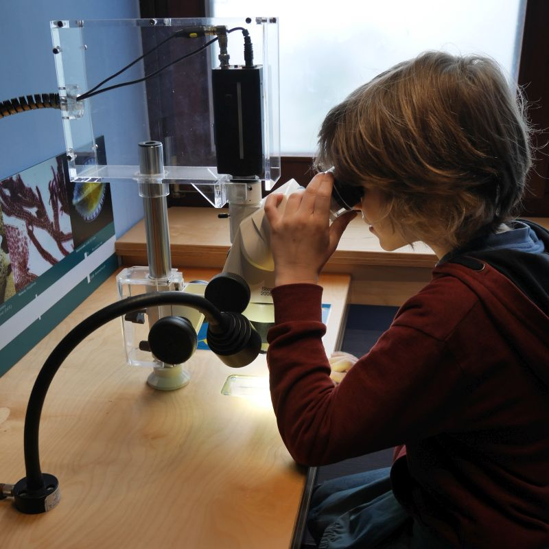 Mikroskop, Aquazoo Löbbecke Museum Düsseldorf mit Kindern