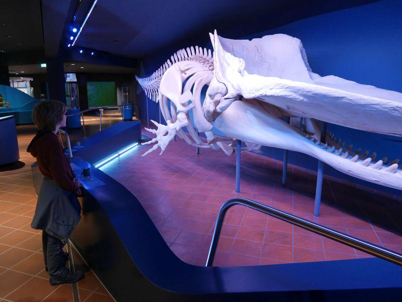 Pottwal-Skelett, Aquazoo Löbbecke Museum Düsseldorf mit Kindern