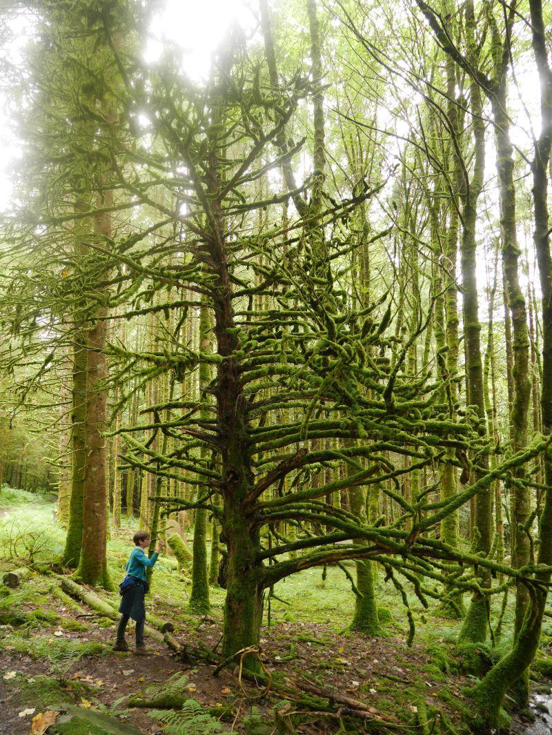 Inveraray mit Kindern, Wandern, Zauberbaum im Wald, Schottland