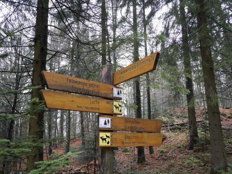 Familienurlaub im Bayerischen Wald, Wandern mit Kindern